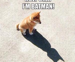 batman, dog, and funny image