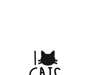 cat, wallpaper, and kitty image