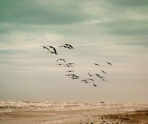 bird, beach, and nature image