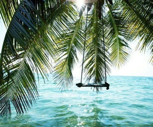palm trees, swing, and water image