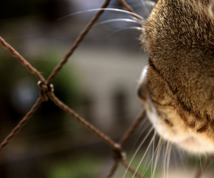 cat, dof, and green image