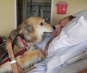 amor, dog, and friendship image