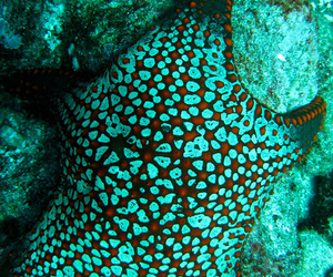 underwater, starfish, and teal image