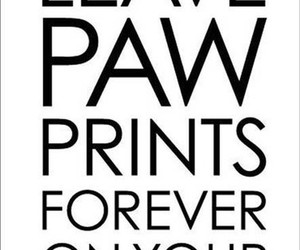 dog, dogs, and forever image