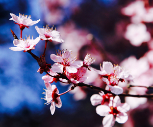 beauty, flower, and pretty image