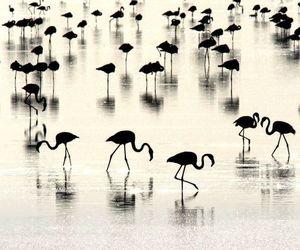 flamingo, water, and animal image