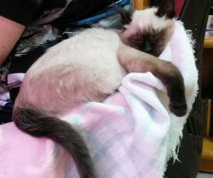cat, cat sleeping, and yara cat image