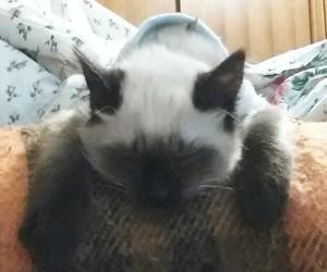 cat, cat sleeping, and yara cay image