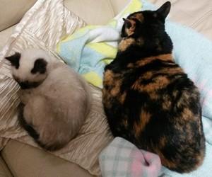 cat, yara cat, and fofa cat image