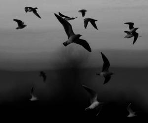 bird, free, and sea image