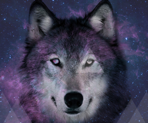 wolf, triangle, and galaxy image