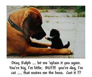 dog, cat, and funny image