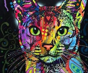 cat and colorful image