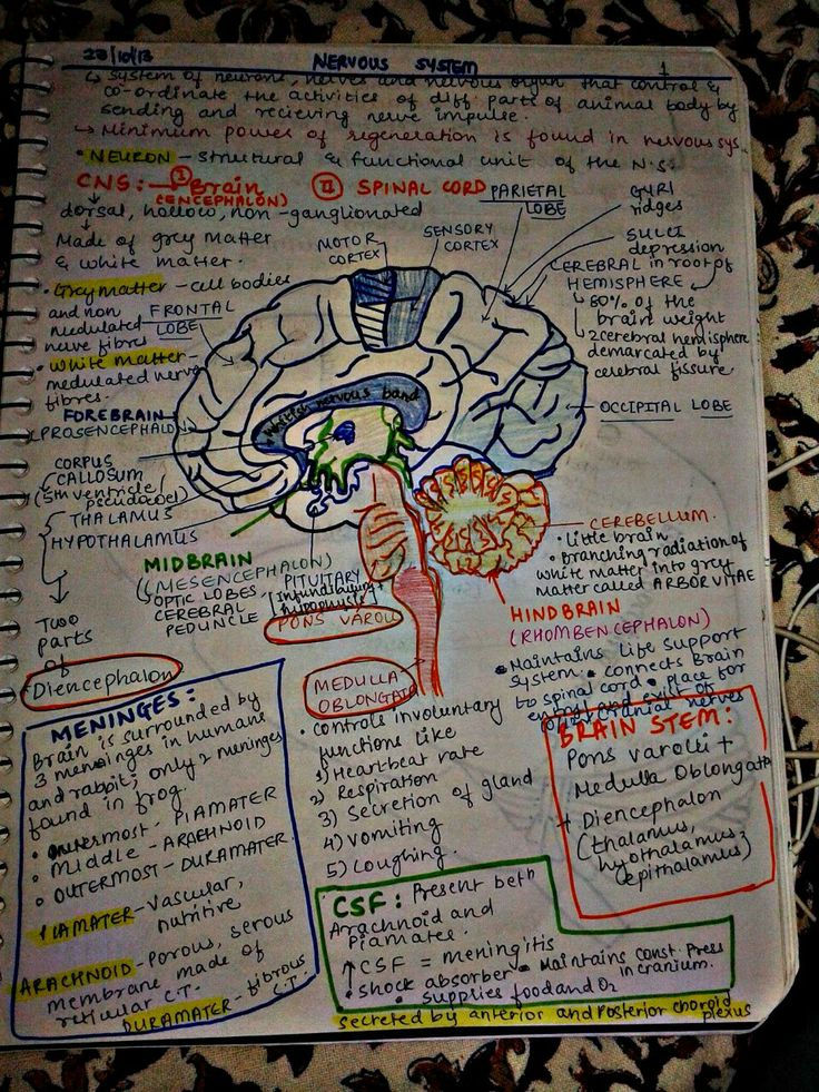 260 images about Study Medicine. on We Heart It | See more about ...