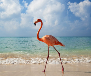 beach, flamingo, and water image