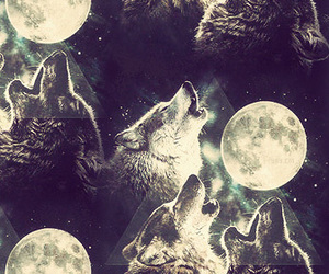 wolf, moon, and hipster image