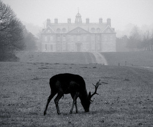 deer, black and white, and animal image