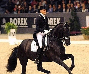 classy, horse, and formen image