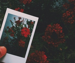 flowers, polaroid, and nature image