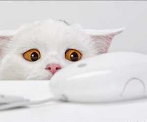 cat, mouse, and white image