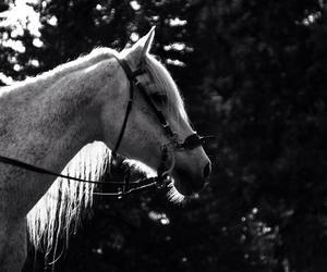 black&white, Connemara, and horse image