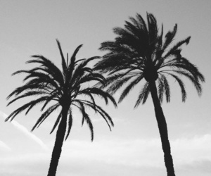 palms, beach, and summer image