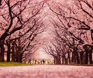 nature, pink, and trees image