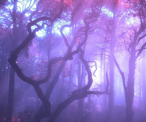 tree, forest, and purple image