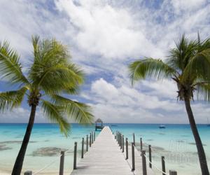 palms, beach, and blue image