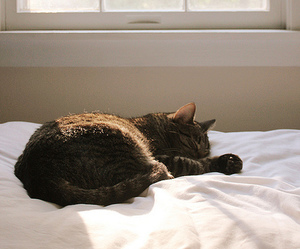 bed, photography, and cat image