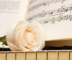 piano, rose, and music image