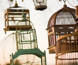 cage, bird, and vintage image