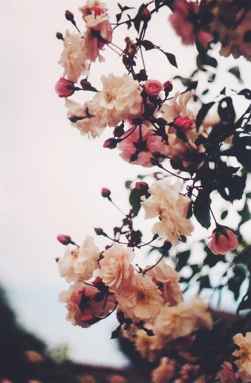 Image About Love In Fleurs By Mrariza On We Heart It