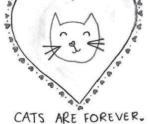 cat, forever, and heart image