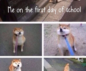 dog, funny, and school image