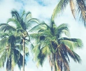 palms, sky, and love image