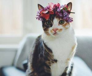 animals, flowers, and indie image