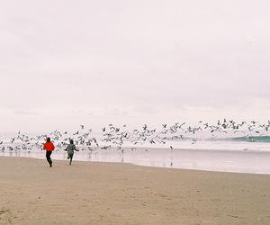beach, bird, and ocean image