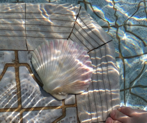 pool, shell, and reflection image