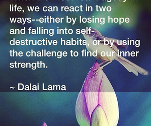 dalai lama, quote, and words image