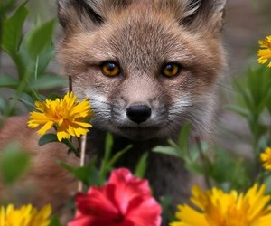 fox, flowers, and animals image