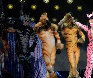 beautiful, cats, and catsuit image