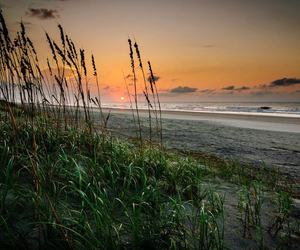 cattails, sunset, and nature image