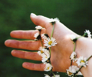 boy, daisy chain, and nature image