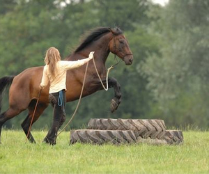 horse and free image