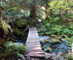 tree, nature, and bridge image