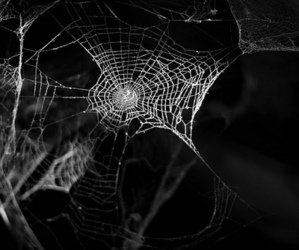 spider, black and white, and Darkness image