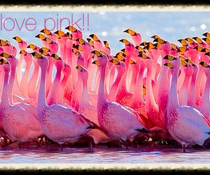 flamingo, water, and love pink image