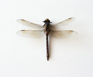 dragonfly, animal, and indie image
