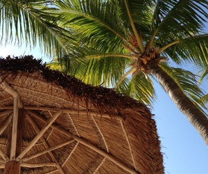 palms, summer, and holiday image
